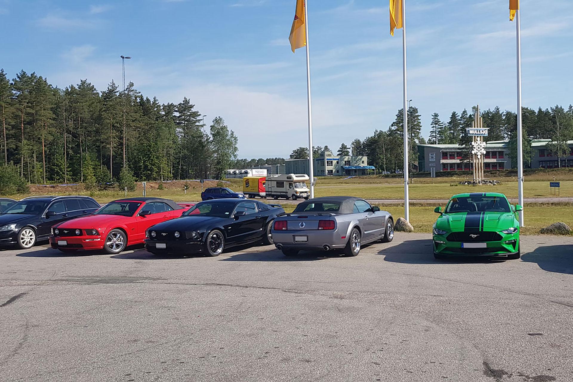 Mustanger på rad